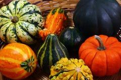 Potirons et courge #1 d'automne Photos stock