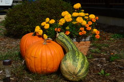 Potirons et courge Image stock