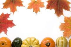 Potirons et courge de thanksgiving Images stock