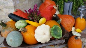 Potirons et courges Image stock