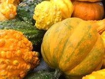 Potirons et courges oranges Photos libres de droits