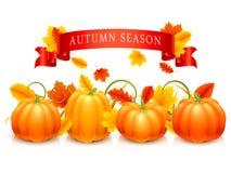 Potirons et lames d'automne Photo stock