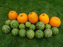 Potirons et melons Images libres de droits