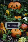 Potirons et tableau avec le mot Halloween Image libre de droits