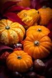 Potirons et thanksgiving Photos libres de droits