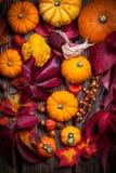 Potirons et thanksgiving Photo stock