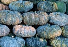 Potirons frais verts sur le marché local pour la vente, texture de potirons Photos stock