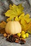 Potirons moissonnés avec des lames d'automne Images stock