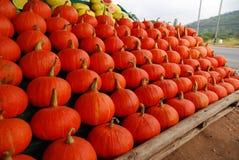 Potirons oranges Photographie stock libre de droits
