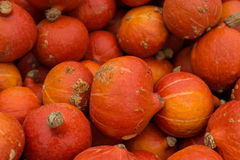 Potirons oranges Photos stock