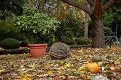 Potirons oranges avec les cactus et l'écrou énorme de mur au sol dans le jardin en Europe photo libre de droits