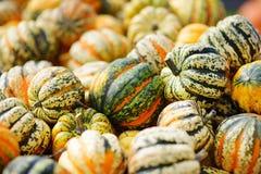 Potirons oranges décoratifs sur l'affichage au marché d'agriculteurs en Allemagne Potirons ornementaux rayés vert jaunâtre au sol Photo libre de droits