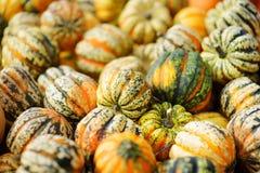 Potirons oranges décoratifs sur l'affichage au marché d'agriculteurs en Allemagne Potirons ornementaux rayés vert jaunâtre au sol Image libre de droits