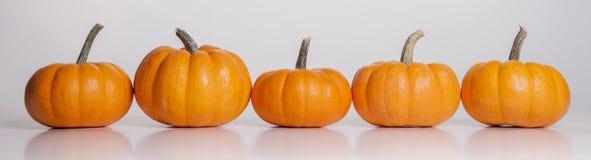 Potirons oranges dans une ligne Photographie stock libre de droits