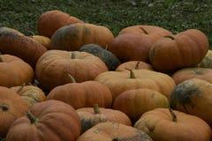 Potirons oranges de conte de fées Photographie stock libre de droits