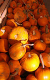 Potirons oranges de Veille de la toussaint Photos libres de droits