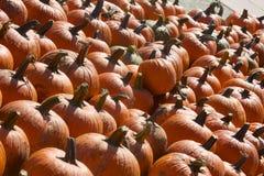 Potirons oranges en abondance Image stock