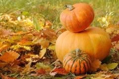 Potirons oranges en automne Images stock