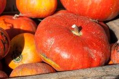 Potirons oranges lumineux au marché du ` s d'agriculteur image stock