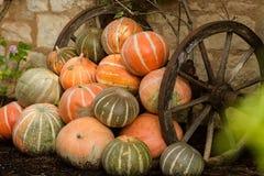 Potirons oranges mûrs empilés Photos libres de droits