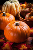 Potirons pour le thanksgiving et le Halloween Photo stock