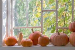 Potirons sur le rebord de fenêtre blanc en bois photo libre de droits