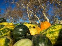 Potirons verts et oranges avec des arbres photographie stock libre de droits