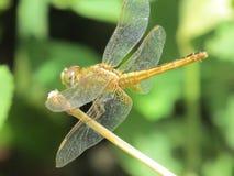 Potography buetifull ptaków insektów natura Zdjęcie Royalty Free
