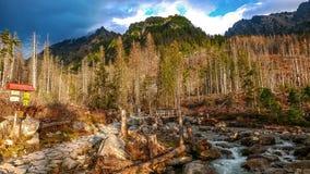 Potok de Studeny Corriente fría en las altas montañas de Tatras, Eslovaquia Foto de archivo