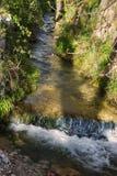POTOK W lesie Zdjęcie Royalty Free