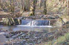 Potok w lesie Obrazy Royalty Free