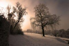 potoki łez ogrodowa willow Zdjęcie Stock