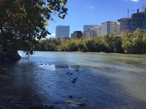 Potomac River Scene with ducks and buildings. View from Theodore Roosevelt Island in Washington DC Royalty Free Stock Photos