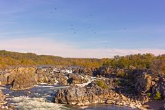 Potomac River waterfalls panorama in Great Falls state park in Virginia, USA. Great Falls state park at sunset in autumn with birds of prey circling above the stock photos