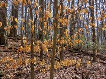 Potomac skogmars 2017 Fotografering för Bildbyråer