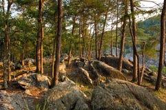 Potomac wood stock photography