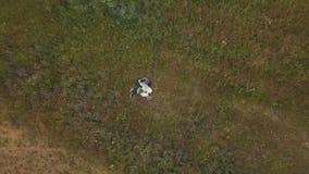 Potomstwa dobierają się wpólnie kłamstwo na polu z kwiatami Lato pogoda Strzelać od powietrza Antena strzał zdjęcie wideo
