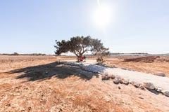 Potomstwa dobierają się obsiadanie pod drzewem w naturze fotografia stock