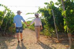 Potomstwa dobierają się, winogradów hodowcy w winnicy, Zdjęcie Royalty Free