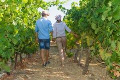 Potomstwa dobierają się, winogradów hodowcy w winnicy, Zdjęcie Stock