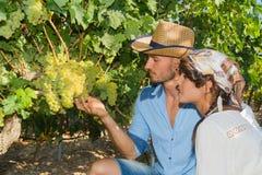 Potomstwa dobierają się, winogradów hodowcy w winnicy, Zdjęcia Royalty Free