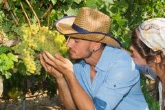 Potomstwa dobierają się, winogradów hodowcy w winnicy, Fotografia Royalty Free