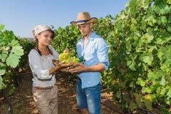 Potomstwa dobierają się, winogradów hodowcy w winnicy, Obrazy Stock