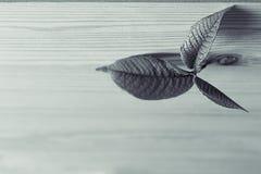 Potomstwa kiełkują, leaf na drewnianym tle, Drewniany tło tła czarny karcianego projekta kwiatu fractal dobrego ogange plakatowy  Obrazy Stock