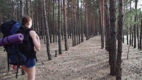 Potomstwa męczyli turystycznej kobiety podróżuje wzdłuż suchego lasu z plecakiem zbiory wideo