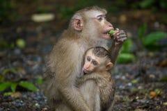 Potomstwa małpują przytulenie Zdjęcia Stock
