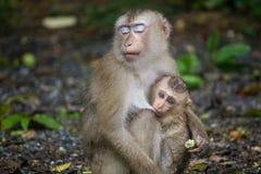 Potomstwa małpa i mama Zdjęcie Royalty Free