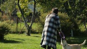 Potomstwa są prześladowanym właściciela dziewczyna bawić się z jej labradorem w zielenieje parka zdjęcie wideo