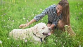 Potomstwa są prześladowanym właściciela dziewczyna bawić się z jej labradorem w zielenieje parka zbiory