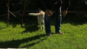 Potomstwa są prześladowanym właściciela mężczyzna bawić się z jego labradorem w zielenieje parka zbiory